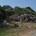 Sono numerose le segnalazioni che continuano a pervenire alla nostra posta elettronica. In questa foto vi mostriamo un'auto abbandonata nei pressi della panoramica, nascosta tra la vegetazione. […]