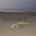 Singolare scoperta di un maddalenino sulla spiaggia del cardellino. Un raro esemplare del pesce pecora ha scelto l'arenile del Cardellino che il lontano oceano gallurese. Nonostante le […]