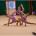 """La società di ginnastica ritmica """"Stella del Mare"""" ha aperto la stagione agonistica con il campionato di categoria e la gara di rappresentativa di serie """"C"""". La […]"""