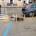 Il Gabbiano Vigile – In molte circostanze abbiamo segnalato la completa assenza della segnaletica stradale nell nostra isola, 'qualcosina' si (ri)vede solo in occasioni particolari. I nostri […]