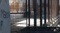 Di Francesco Nardini – Continuano a giungere alla redazione di 'Liberissimo' segnalazioni della presenza di ibridi di cinghiale, sia nell'isola di Caprera che nell'isola della Maddalena. Ormai […]