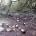Ancora attendiamo la chiamata dal Parco per dargli le coordinate di dove si trovavano le bottiglie di birra a rifiuti a Caprera, nel frattempo i Ragazzi di […]