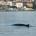 """""""Il Comune di La Maddalena ha il piacere di patrocinare e ospitare presso l'atrio comunale la mostra fotografica intitolata """"Soffia! balenottere e delfini del Canyon di Caprera […]"""