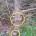 Come noterete in alcune foto inviatici da un nostro lettore noterete alcuni alberi di Ginepro tagliati, il tutto nella zona tra la campagna di Guardia Vecchia e […]