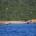 Secondo quanto ci è stato riferito, anche se qualcuno ha nascosto il fatto, quattro canoisti ospiti di una struttura di un centro costiero venerdì 7 Ottobre si […]
