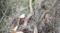 Durante un sopralluogo nell'isola di Caprera, specificatamente nella zona di Candeo, da parte del personale dell'Ente Parco sono venuti alla luce, nuovamente, danni ambientali che rispondono a […]