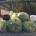 Continua a ritmo sostenuto la pulizia delle spiagge di La Maddalena e Caprera (nelle foto alcuni dei moltissimi sacchi di rifiuti raccolti dalla ditta incaricata dal Comune. […]