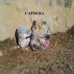 RIFIUTI CAPRERA 3