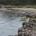Abbiamo ricevuto numerose segnalazioni positive riguardate la ditta incaricata dal Comune di ripulire gli arenili dai rifiuti portati dal mare o lasciati dagli umani e negative per […]