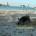 Le segnalazioni ricevute dal sottoscritto e dall'Ente Parco per un video pubblicato che riguardava i cinghiali a Caprera, creando un certo allarmismo, non apparteneva a La Maddalena […]
