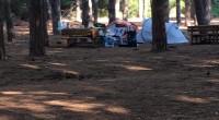 Nei giorni scorsi un nostro amico ci ha girato due foto prese da facebook e pubblicate da Gigi Verde: campeggio a Caprera. Appena le abbiamo ricevute non […]
