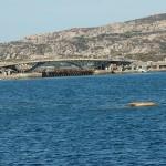 nuovo ponte di caprera ok