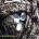 COMUNICATO STAMPA ENTE PARCO Ha avuto inizio il censimento completo dei marangoni dal ciuffo che nidificano nell'Arcipelago di La Maddalena; si tratta di una specie apparentemente simile […]