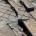 Non è passato inosservato all'occhio del lettore di Liberissimo il pericoloso gradino e la buca che si è formata sul lungomare di Piazza Umberto I°. Siamo consapevoli […]
