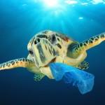 tartaruga plastica OK