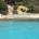 E dopo le segnalazioni relative alla mancata collocazione dei Cavi Tarozzati sulle spiagge, che stanno creando diversi pericoli per i bagnanti, anche i cinghiali presenti sulle Isole […]
