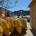 Nel precedente Liberissimo abbiamo pubblicato le foto delle condizioni dei gommoni dell'Ente Parco, oggi dal nostro amico il gabbiano corso abbiamo scoperto che non potevano essere utilizzati […]