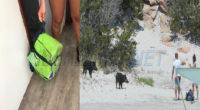 Nella giornata di martedì tre distinti turisti hanno avuto una brutta esperienza con due cinghiali nella piccola spiaggia di Cala Granara. Una famiglia di Caserta ha visto […]