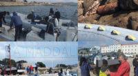 Anche nella giornata di sabato i volontari hanno operato tra mille difficoltà a causa del mare mosso: nord dell'isola delle Bisce era impossibile e pericoloso ormeggiare. Infatti, […]