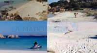 Nonostante siamo in possesso di foto che riguardano le ultime invasioni sulla Spiaggia Rosa, pubblicate sui social, abbiamo preferito sfogliare il nostro archivio. Dalla partenza dell'ex guardiano […]